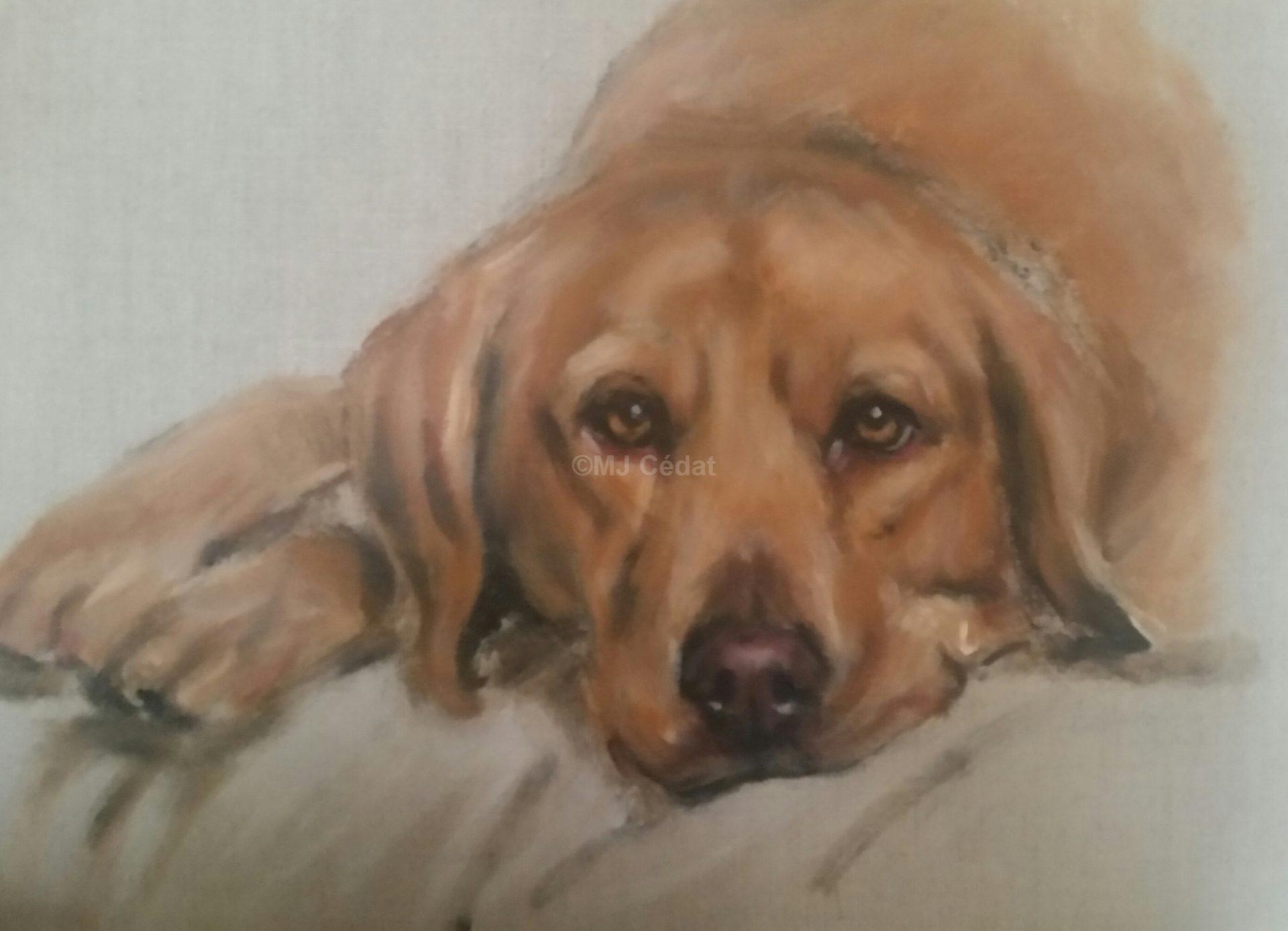 Labrador doré - Acrylique sur lin brut - 50 x 40 cm