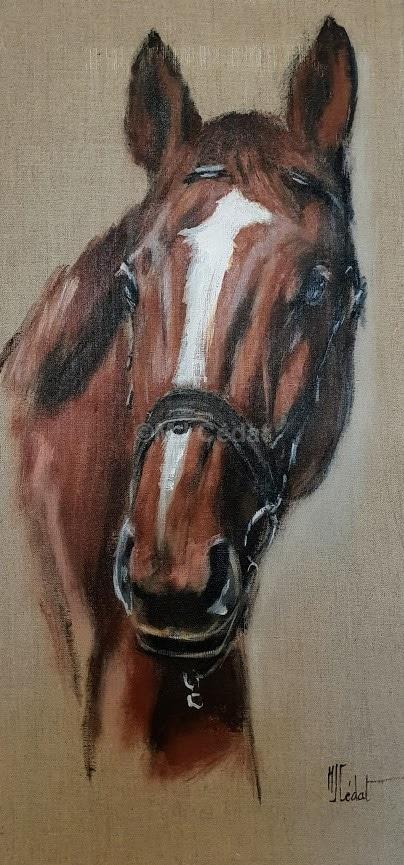 Portrait Cheval -Marie-Joëlle Cédat-artiste animalier peinture animaliere-art-animalier- peintre-animalier