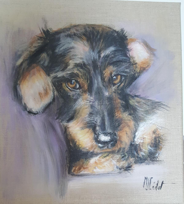 Teckel lové 2 -Marie-Joëlle Cédat-artiste animalier peinture animaliere-art-animalier- peintre-animalier