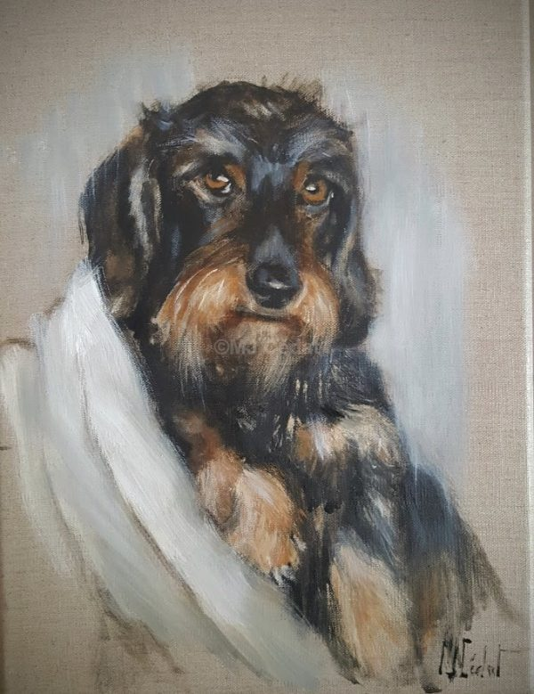 Teckel lové dans son fauteuil -Marie-Joëlle Cédat-artiste animalier peinture animaliere-art-animalier- peintre-animalier