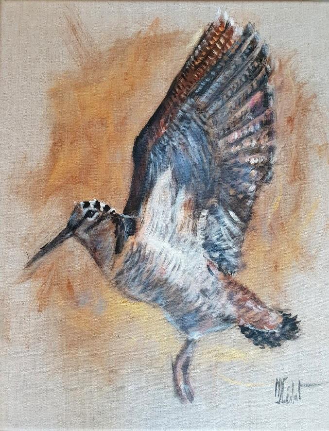 Envol de bécasse -Marie-Joëlle Cédat-artiste animalier peinture animaliere-art-animalier- peintre-animalier
