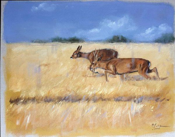 Rut du chevreuils - Acrylique sur lin brut - 70 x 65 cm - Marie-Joëlle Cédat artiste animalier peinture animaliere