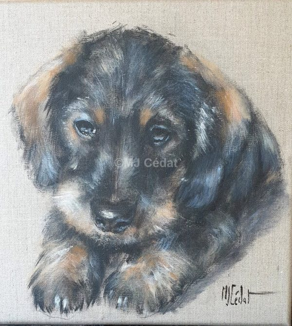 bébé Teckel-Marie-Joëlle Cédat-artiste animalier peinture animaliere-art-animalier- peintre-animalier