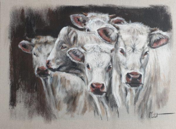 Groupe de charolaises vaches-Marie-Joëlle Cédat-artiste animalier peinture animaliere-art-animalier- peintre animalier